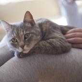 kat heeft koude oren