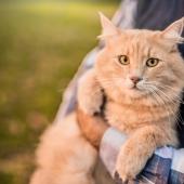 hoe oud wordt een kat