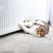 lichaamstemperatuur kat