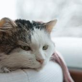 kat verkouden