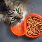 kat eet niet