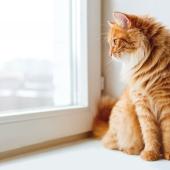 kat op appartement