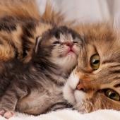 kat en kitten
