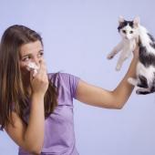 allergisch voor katten