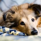 artrose hond gewrichten verwachting