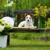 giftige planten hond tuin buiten gevaarlijk