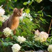 giftige plant kat gevaarlijk buiten