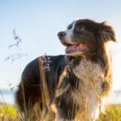 hond gelukkig behoeften blij
