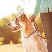 hond uitlaten wandelen lopen