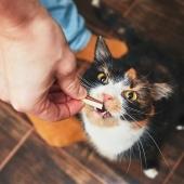 Kat opvoeden gedrag
