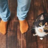 Kat binnen bezig houden