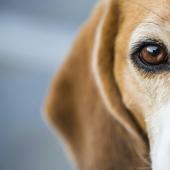 De ogen van je hond verzorgen: alles wat je moet weten