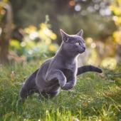 Meer beweging kat