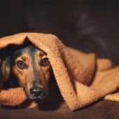 Stress honden verminderen, voorkomen, tips, kalmeren