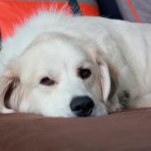 Mijn hond heeft artrose. Moet ik hem nu laten inslapen?
