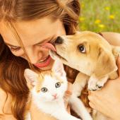 hond en kat samen opvoeden