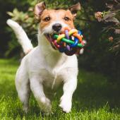 puppy met speeltje