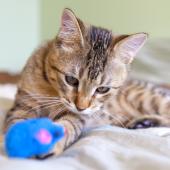 Zelf kattenspeeltjes maken: de leukste tips!