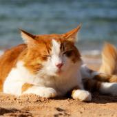 kat heeft het warm