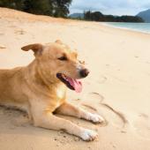 hond op strand