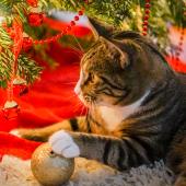 kat in kerstboom