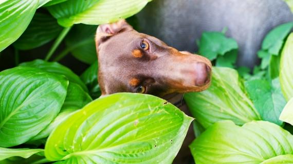 hond tussen planten