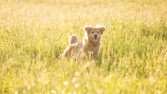 Grasaren bij honden: wat kan je doen?