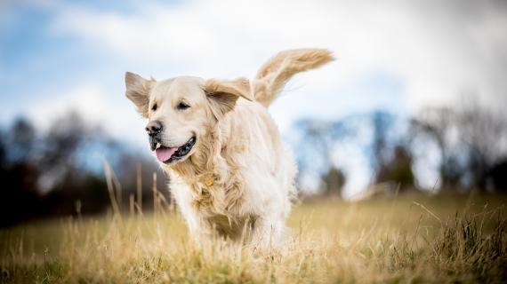 hond in beweging