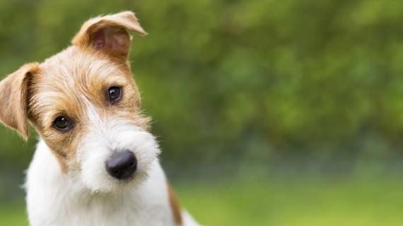 urineverlies bij hond