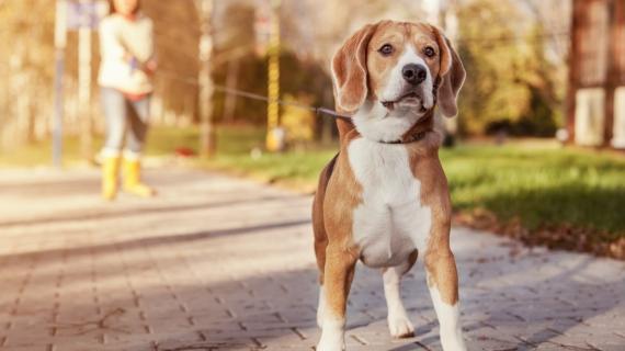 Mijn hond blaft altijd naar andere honden. Hoe leer ik het hem af?