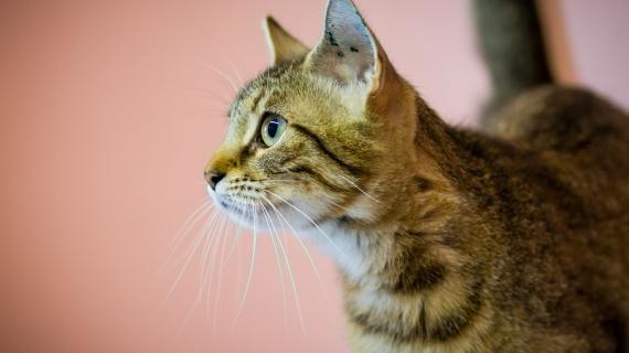 lichaamstaal kat