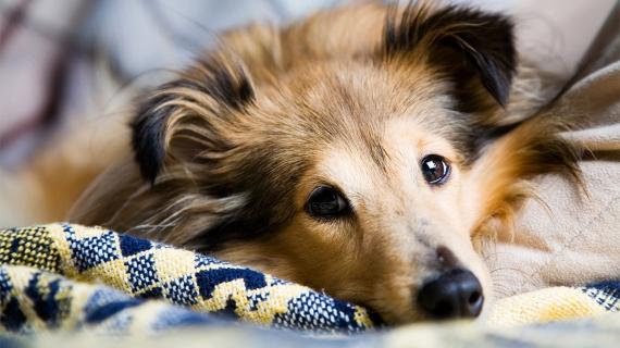 Artrose bij de hond: wat kun je verwachten?