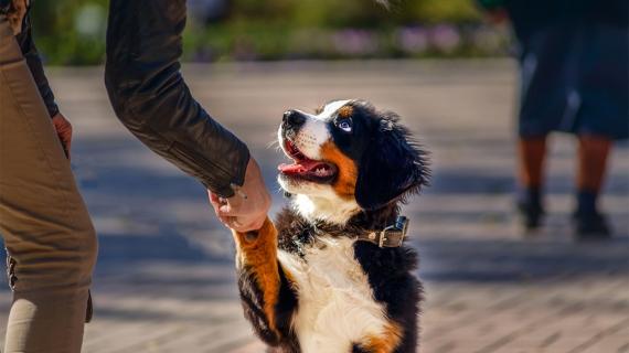 hond opvoeden hondengedrag