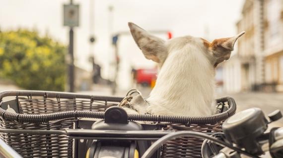 hond in fietsmand