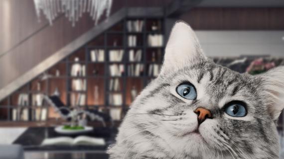 5 tips om je kat te ondersteunen tijdens het vuurwerk