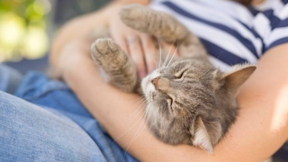 Kat ontwormen makkelijk snel