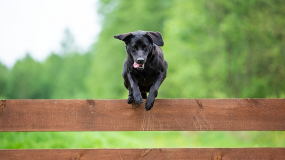 hond beweging gezond sterk