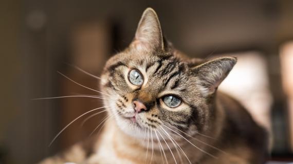 kat artrose behandeling