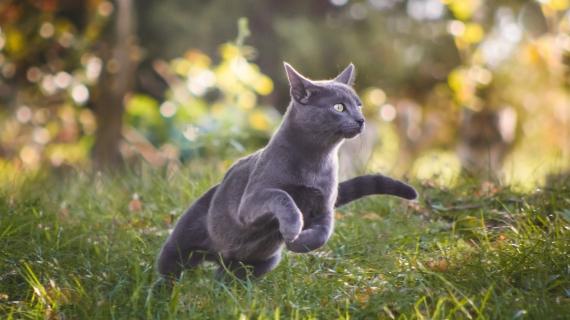 Zo komt je kat in beweging
