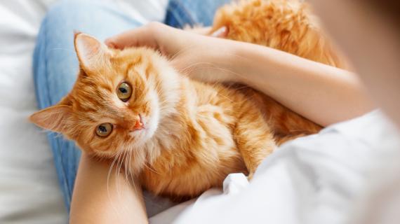 Heeft je kat koorts? Dit moet je in de gaten houden …