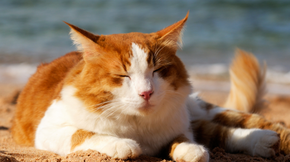 kat in de zon