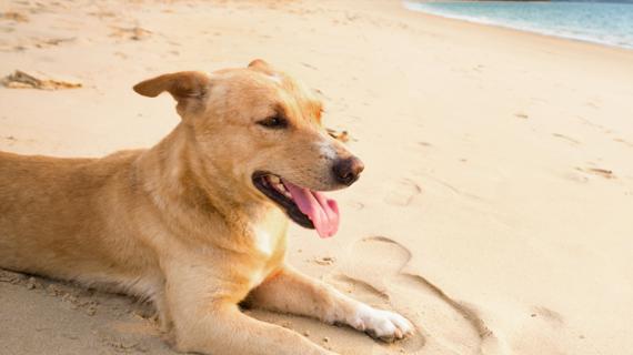 Samen eropuit! Dit zijn de leukste hondenstranden in Nederland